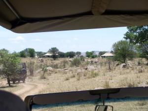 Sayari tent camp