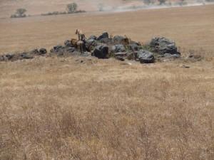 Same couple atop a rock